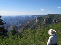 Looking out at the Grand Canyon from Kaibab National Forest.