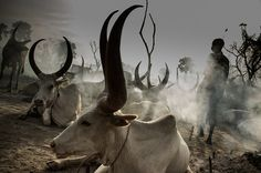 v1gilante:  DINKA-4796 Cattle camp by jeromestarkey on Flickr.