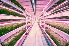 Underground Farm Opens Up in London's Abandoned World War II Bunkers [The Future of Agriculture: http://futuristicnews.com/tag/future-agriculture/ The Future of Food: http://futuristicnews.com/tag/future-food/]