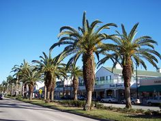 Downtown Venice Island Shopping in Venice, Florida
