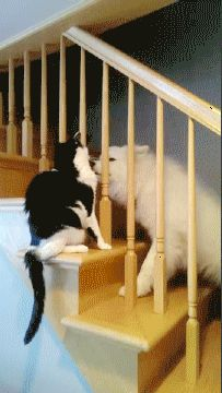 Love through Banister