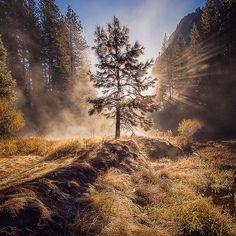 «Yosemitree  Taken on an awesome trip up to #yosemite a few months ago with @shainblumphotography and @kellydelay  @yosemitenps @usinterior #NationalPark»