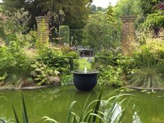 Former garden designer creates stunning 'Olympic Garden' at her home Olympic Garden, Virginia Creeper, Pond Liner, Agapanthus, Healthy Environment, Shades Of Gold, Different Flowers, Shade Plants, Garden Spaces