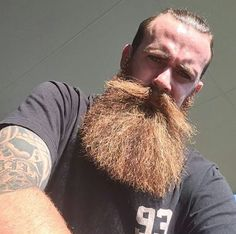 The Envious Beard Beard Boy, Beard Fade, Red Beard, Beard No Mustache, Moustache, Hairy Men, Bearded Men, Hot Ginger Men, Male Pattern Baldness