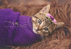 Photographer's Newborn Kitten Photoshoot Goes Viral