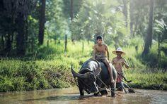 #Farm  #Asian  #Buffalo