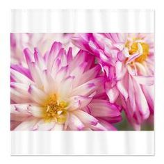 Two White And Pink Dahlias Shower Curtain Shower Curtains Daphsams Amazing Flowers #dahlia #curtainshower #cafepress #flowers $40.49