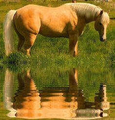 ~ Golden Reflection ~