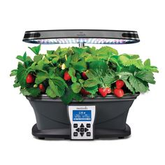 MiracleGro AeroGarden ULTRA LED Indoor Garden with Gourmet Herb Seed Kit and Liquid Plant Food  $279.95 http://www.ebay.com/itm/MiracleGro-AeroGarden-Indoor-Garden-Hydroponic-Grow-System-LED-High-Output-/221725529024?