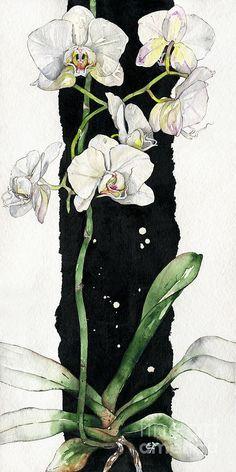 Flower ORCHID 05 Elena Yakubovich Painting  - Flower ORCHID 05 Elena Yakubovich Fine Art Print