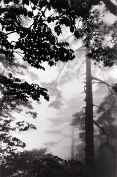 Pine forest in mist, taken at Stone Bamboo Shot Bridge, June 2004  From Celestial Realm: The Yellow Mountains of China  Wang Wusheng