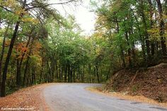 #alabama #vinemontal #vinemont #alabamafindings #green #beautiful #beauty #professional #professionalpictures #pretty #love #nature #bushes #trees #leaves #sky #yellow #orange #road #fall #hannahhansenphotography #naturephotography