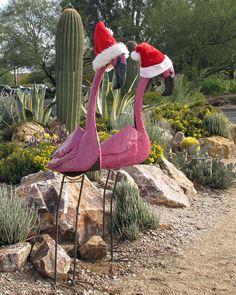 Christmas Flamingos - Santa wanna be's.