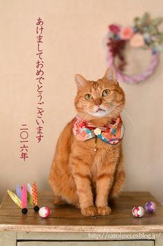 猫襟とお揃い小物で、新年の幕開け Handmade Cat's Collar & Matching Accessories : お茶の時間にしましょうか-キャロ&ローラのちいさなまいにち- Caroline & Laura's tea break