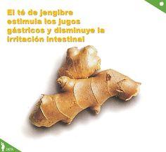 El té de jengibre estimula los jugos gástricos y disminuye la irritación de las paredes intestinales gracias a  la acción que sus enzimas ejercen sobre las proteínas de la digestión y en su apoyo probiótico a la flora intestinal.
