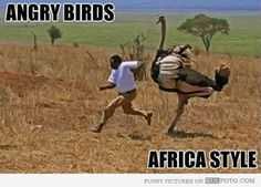 angry birds...africa style