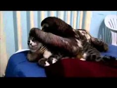 Sloth Hugging Cat To Sexy Music...Creepy and Gross! http://mycatcentral.com/sloth-hugging-cat-sexy-music-creepy-gross/