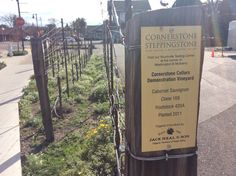 Wine is literally on every sidewalk in Napa valley California. Yountville, Calistoga and st Helena are some of the best vineyard trails to discover in California