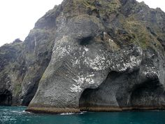 Giant Sea Elephant Emerges From The Ocean In Iceland