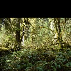 Hoh Rainforrest, Pacific Peninsula.