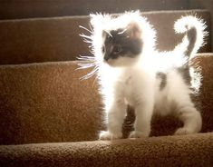 All fuzzy in the sunlight.