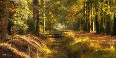 autumn colors - #GdeBfotografeert Autumn Leaves, Country Roads, Explore, Colors, Fall Leaves, Autumn Leaf Color, Colour, Color, Exploring