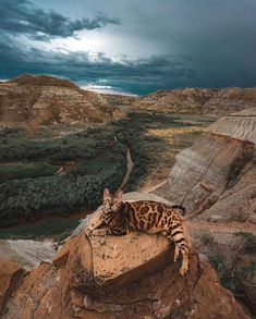 Suki would have fit right in with the dinosaurs that once roamed this valley! 😸🦖 This is one of our favourite parks, because you can find… Warrior Cats, Cute Cats And Kittens, Cool Cats, Animals And Pets, Cute Animals, Adventure Cat, Cat Vs Dog, Cats Musical, Photo Chat