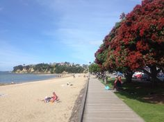 The boardwalk between Mission Bay and St Heliers Bay, Auckland lined with pohutukawa trees.