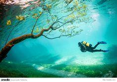 Sihirli göldeki dalgıç