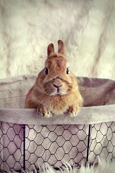 - My best shares Animals And Pets, Baby Animals, Cute Animals, Baby Bunnies, Cute Bunny, Cutest Bunny Ever, Cutest Bunnies, Honey Bunny, Tier Fotos