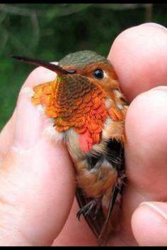 What a gorgeous little Bird.....