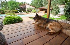 Hund på tre-terrasse
