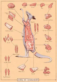 cuts-of-kangaroo-illustration-meat.jpg