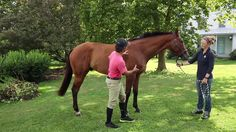 What to look for in an OTTB prospect for eventing on Vimeo   Evention TV