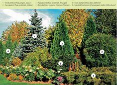 Ako kupovať akombinovať dreviny do záhrady 3 Gardening, Painting, Art, Art Background, Garten, Painting Art, Kunst, Paintings, Lawn And Garden