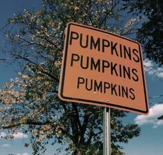 @curly_casey Autumn Inspiration, Intp, Hallows Eve, I Fall, Fall For You, Fall Days, Happy October, Happy Fall Y'all, November