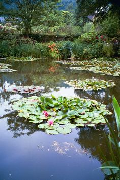 A visit to Monet's garden, Giverny, France Claude Monet, Monet Garden Giverny, Giverny France, Monet Paintings, Lily Pond, Parcs, Water Garden, Dream Garden, Beautiful Gardens