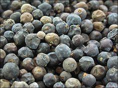 Ienupar (Juniperus communis ) Juniperus Communis, Blueberry, Fruit, Food, Berry, Essen, Meals, Yemek, Blueberries