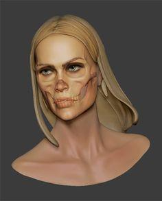 Femal skull study by Arnaud Koteinikoff
