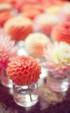flowers and colour scheme