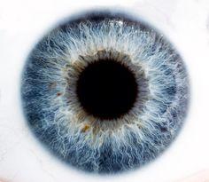 Oeil Hivernal | étrange cosmos bleuté et tentaculaire ( ou spaghettis aquatiques & poissons rouges )   Test divers macro 2:1 ( 65 Mp-E )  @ Alexandre Deschaumes