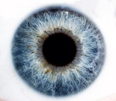 blue via Alexandre Deschaumes Alexandre Deschaumes, Photo Oeil, Iris Eye, Lasik Eye Surgery, Eye Sketch, Dragon Eye, Human Eye, Eye Photography, Eye Tutorial