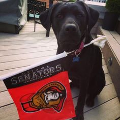 "During the team's push for the Stanley Cup, Senators forward Matt Kassian ‏@kassassination tweeted this:  ""Sheba is ready for the @NHL_Sens GM4!"""