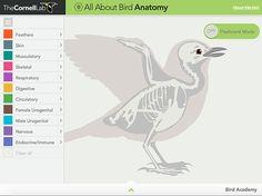 Image result for bird anatomy