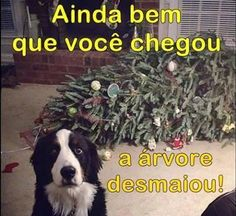 Ideas for quotes christmas funny hilarious Funny Quotes, Funny Memes, Hilarious, Jokes, Dog Memes, Laugh Or Die, Animal Pictures, Funny Pictures, Funny Pics
