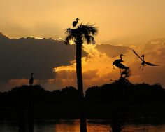 Sunrise at Viera by jwkeith, via Flickr
