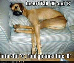 Funny Dogs with Captions | Funny Dog Pictures with Captions Wallpaper