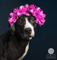 Stacey Gammon Photography ~ Adoptable Pets