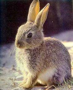 Resultado de imagen para del conejo