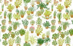 #desktop #wallpaper #plants